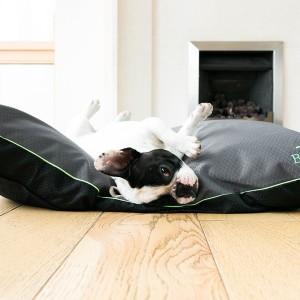 CushionDog